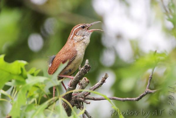 Birding 2011 June