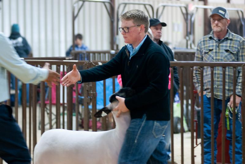 kay_county_showdown_sheep_20191207-100.jpg