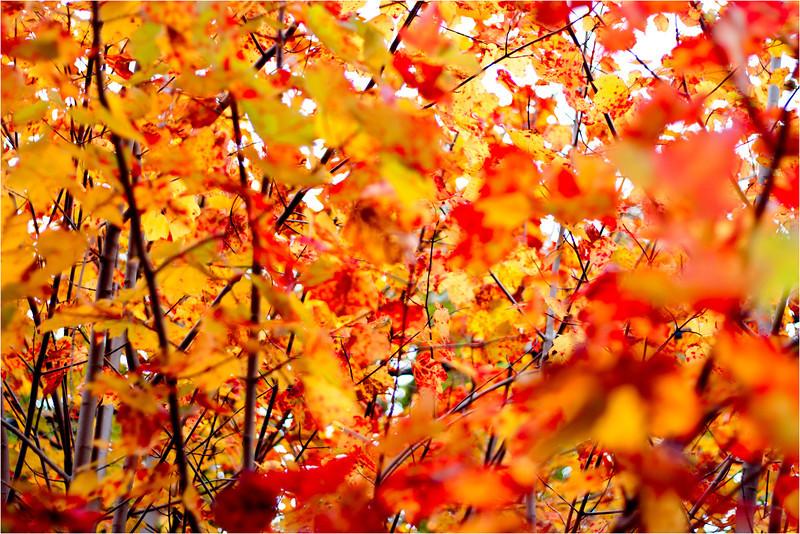 20111019_Autumn01.jpg