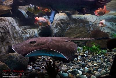 Aquarium de Québec 2018