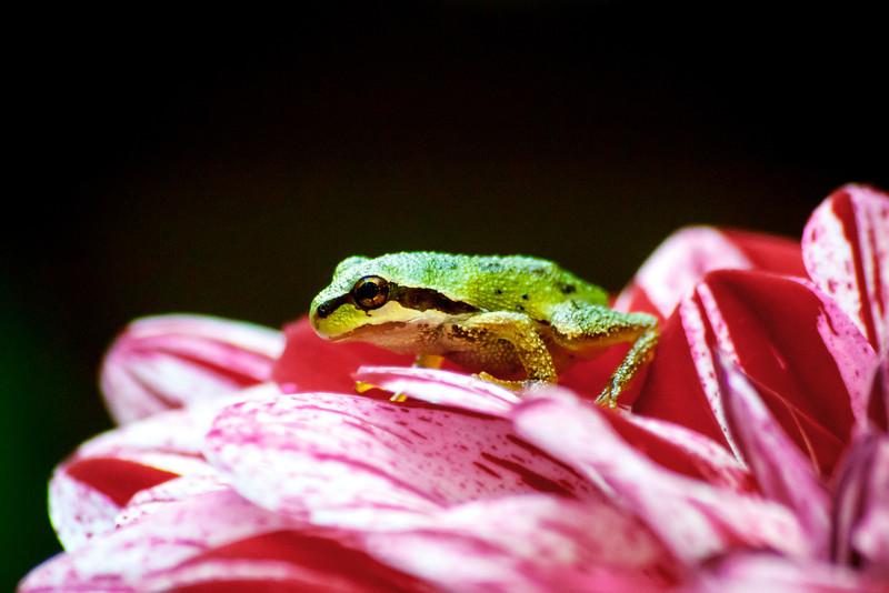 20110903_Frogs0028.jpg
