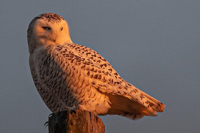 owls-103.jpg
