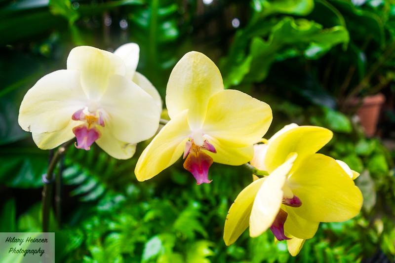 Flowery Dream 2