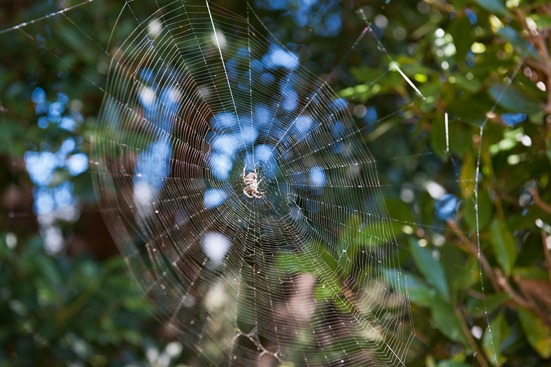 There were a bunch of spiders all over but I couldn't really get any good pictures cuz 70mm on a D700 isn't that much of a telephoto :(