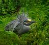 Birds-Olympus