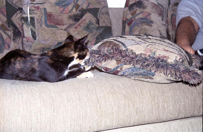 2003 12 - Cats 55.jpg