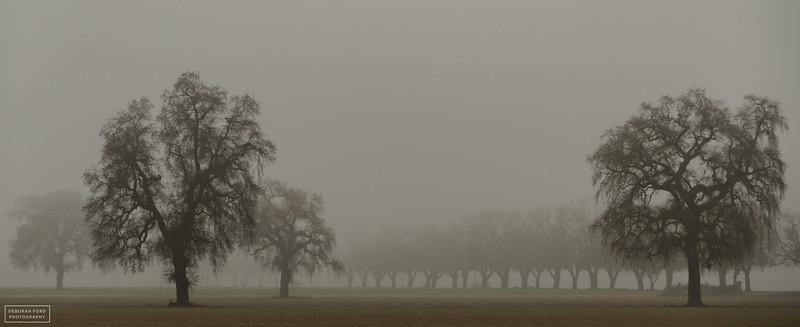 Yolo County Winter
