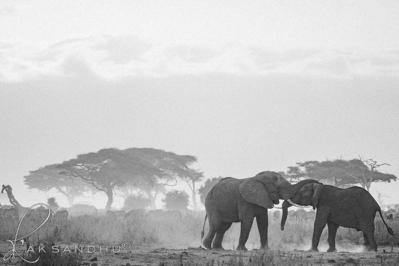 SunInAfrica-022.jpg