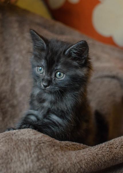 kitten001-1.jpg