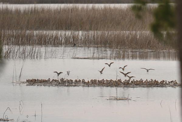 Birds at 309RR
