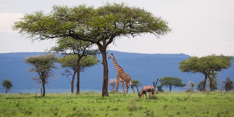 Serengeti National Park, Tazania