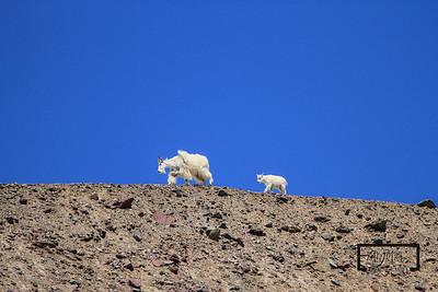 Glacier Wildlife
