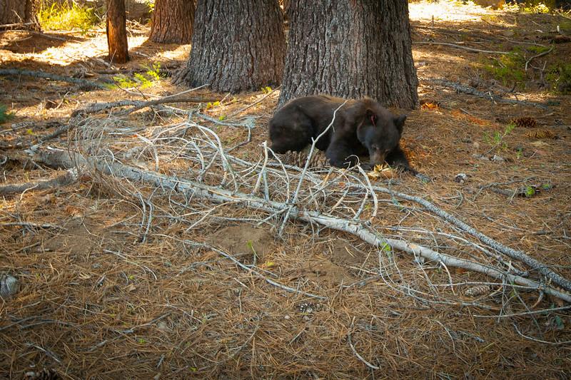 20140826_sequoia_0363.jpg