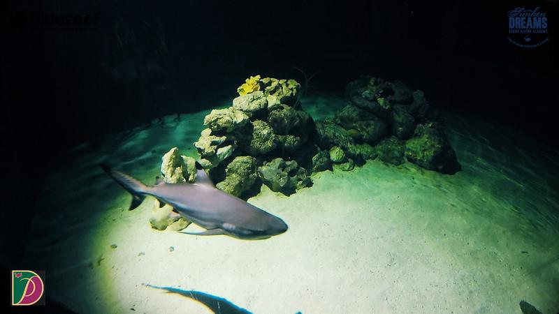Blue Reef.00_10_18_45.Still009.jpg