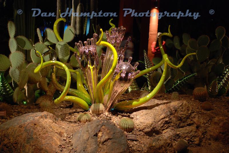 Desert Botanical_293.JPG