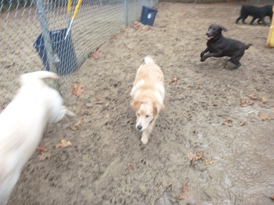 All Dogs Gym 11-17-2014