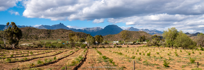 Vyversrus with the Swartberg Mountains in the background.