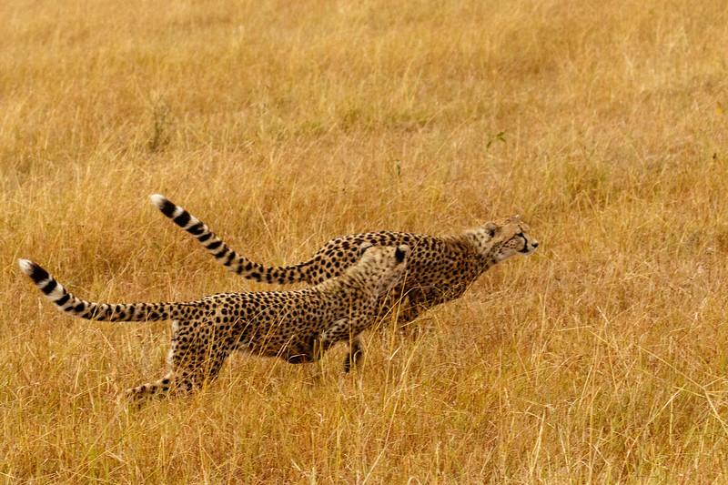 Kenya 2015-07680.jpg