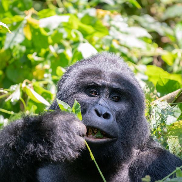 Uganda_T_Gor-902.jpg