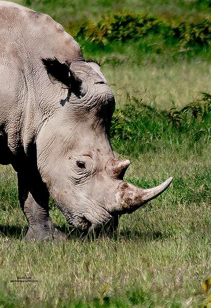 Kenya Aug.2016