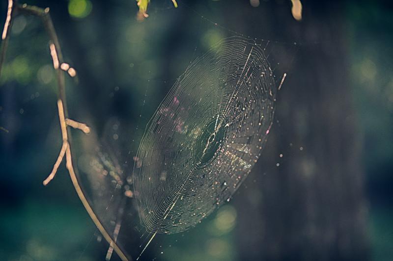 20190831-HobbsStatePark-VanWinkleTrail-SpiderWeb-1.jpg