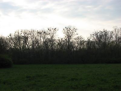 2008 Heron Count