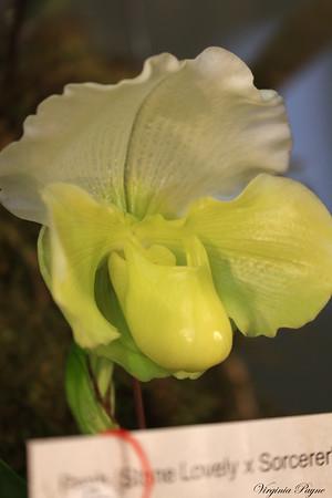 OrchidShowNashua - 02/11/17