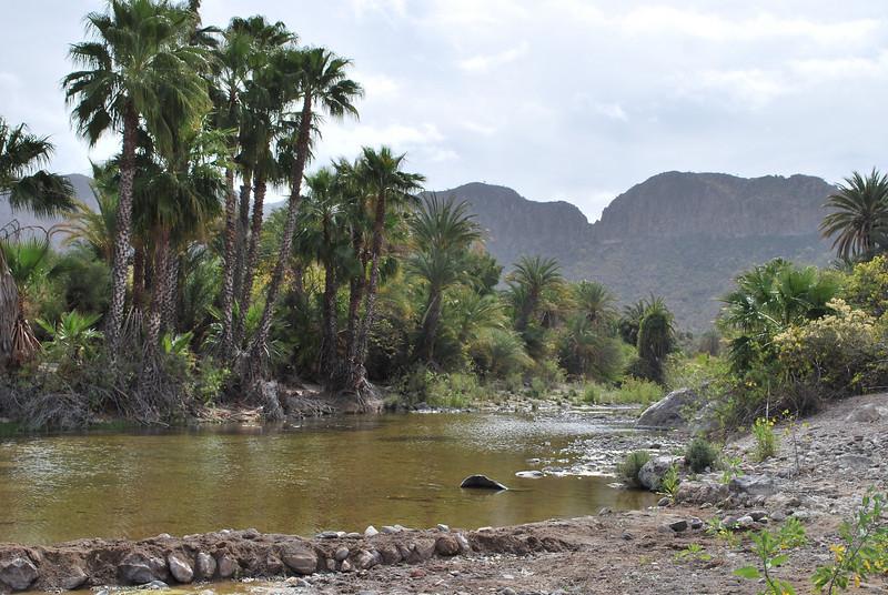DSC_0052 palm oasis.JPG
