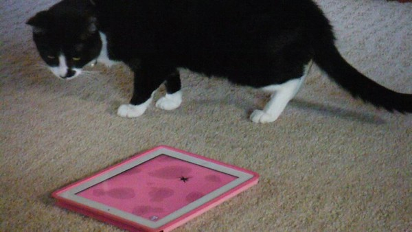 videos - chasing electronic spider on iPad