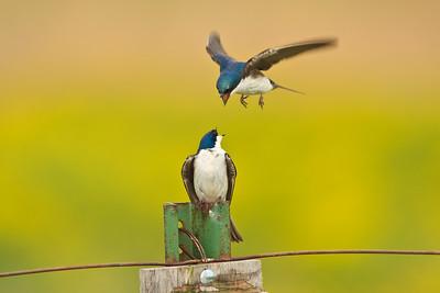 Ornithology Images