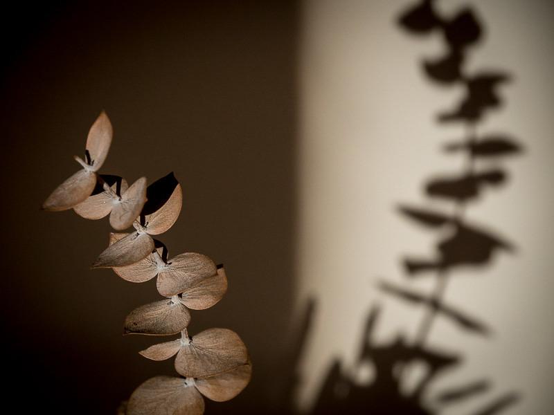 December 13 - Shadow-1.jpg