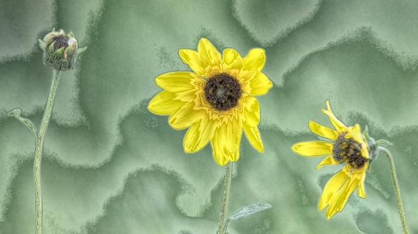 Birds & Wildflowers