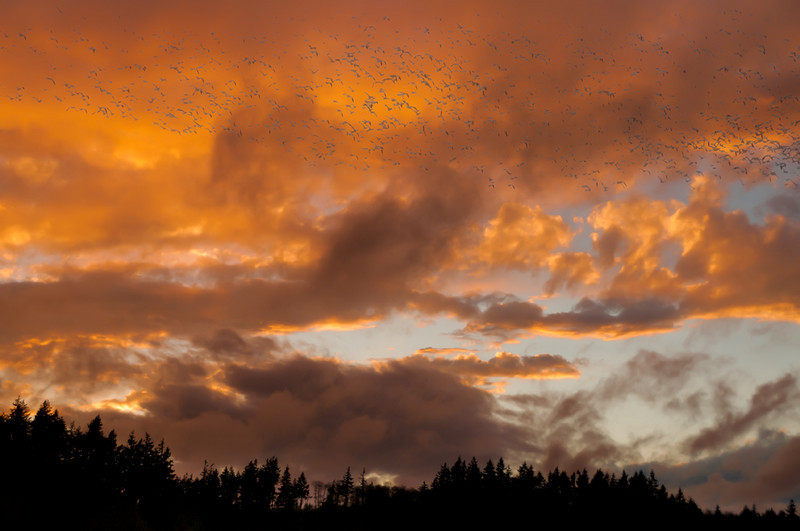 clouds_13328_gathering_storm-sm.jpg