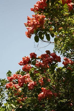 Flora Fauna_0007.JPG