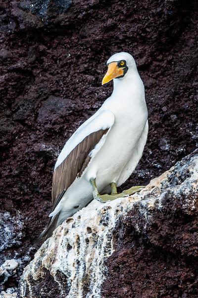 Galapagos-3252-2.jpg
