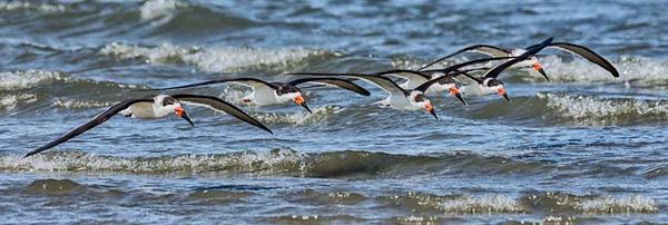 East Beach, Galveston TX  -  USA