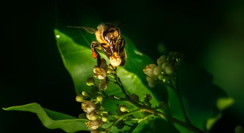 Bugs and Beetles - 66.jpg