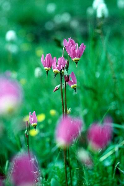 amh FLOWERS (1231).jpg