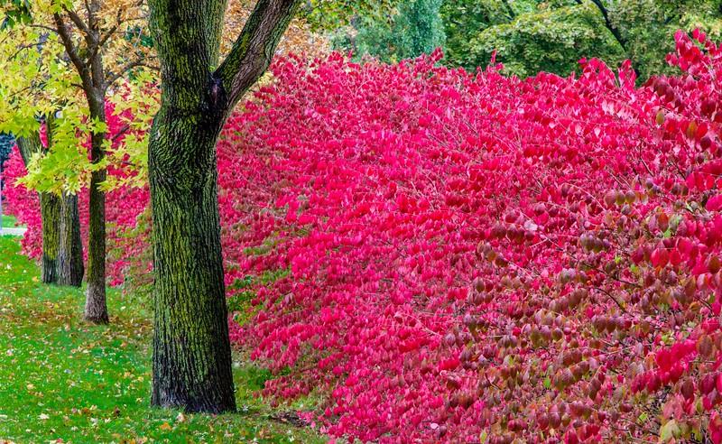 edwards garden autumn 2012-.jpg