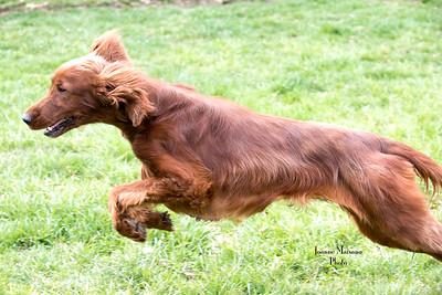 Middleburg Humane Foundation dogs/animals