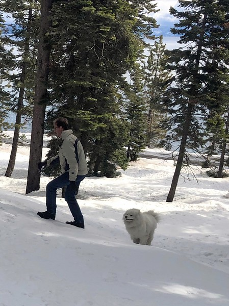 2019-03-21-0016-Trip to Tahoe with Dogs-Lake Tahoe-Curtis-Teddy the Dog.JPG