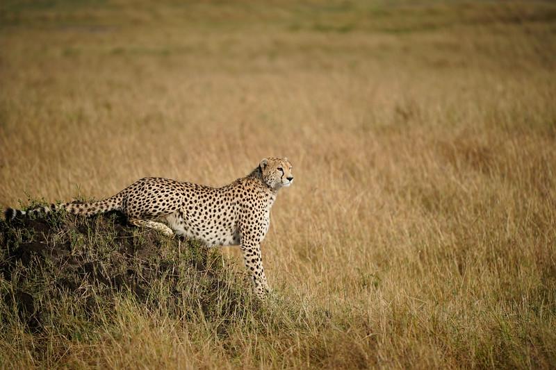 safari-2018-68.jpg