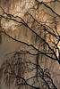 126-winters veil-cragside2_0169_Enhancer