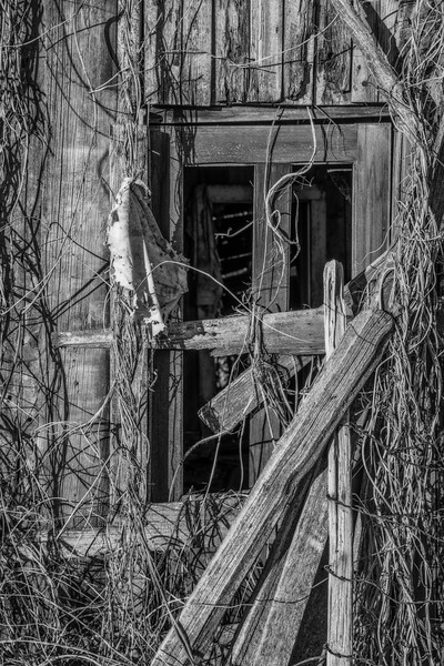 Hashagen Window
