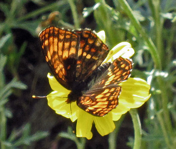 NABA Butterfly Count - July 4, 2013