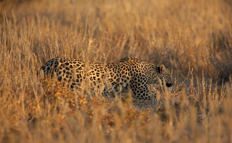 Leopard - 5410.jpg