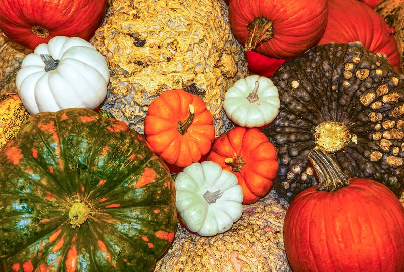 Pumpkins-2.jpg