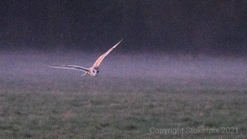 Barn Owl stealth fighter