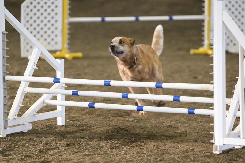 3-10-2019 Bloodhound-9116.jpg