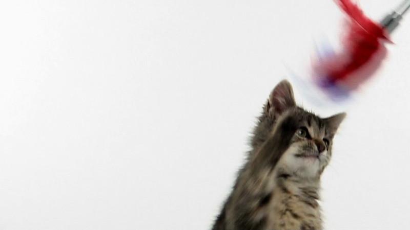 kitten_708_slow.mov